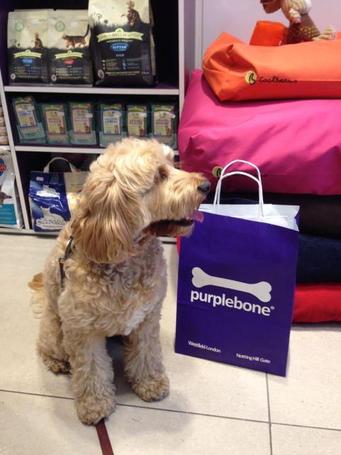 Dog Borrowing Sharing Vernon Canada Bc
