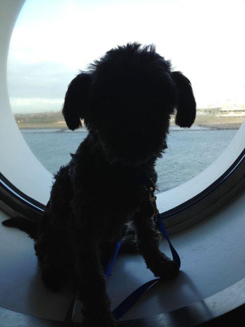 Dog Grooming Port Elgin Ontario