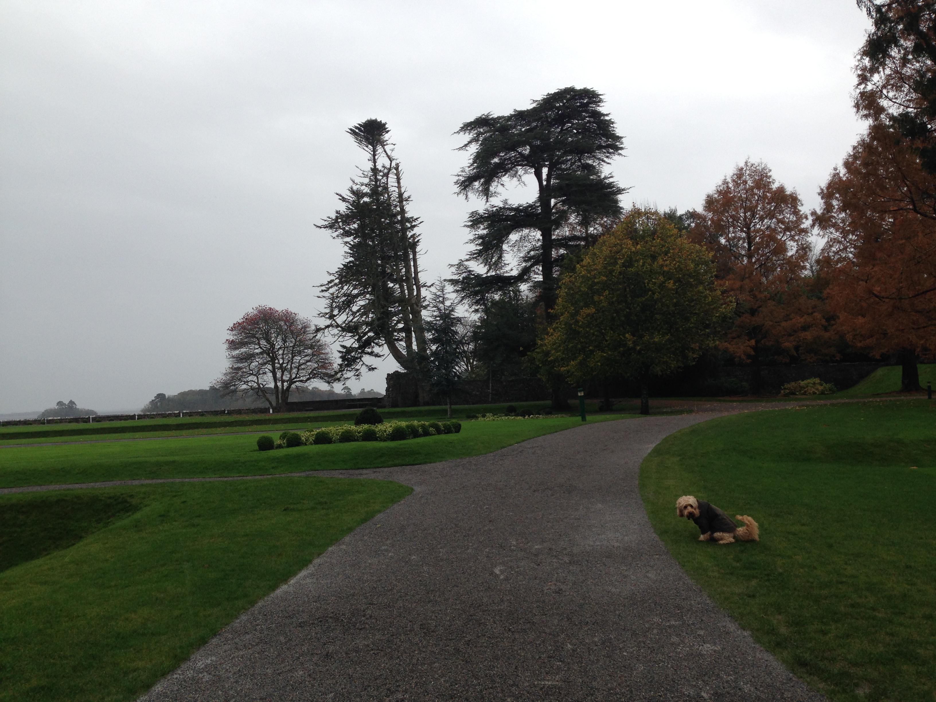 Dog Walks Castle Douglas