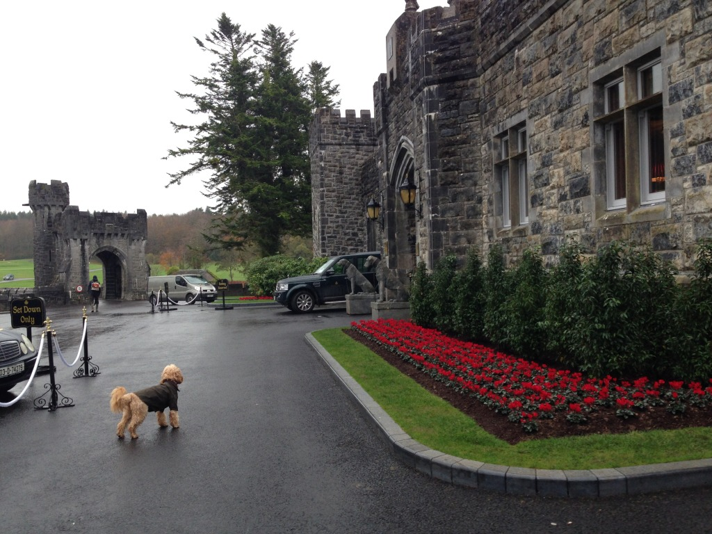 Image Result For Dog Training Castle