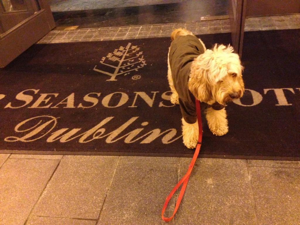 Dog Training Grafton Wi