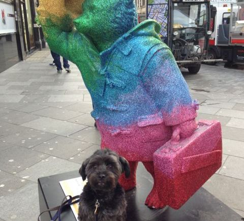 Dapper Dogs Grooming Greencroft
