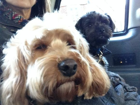 Grooming Dogs Near