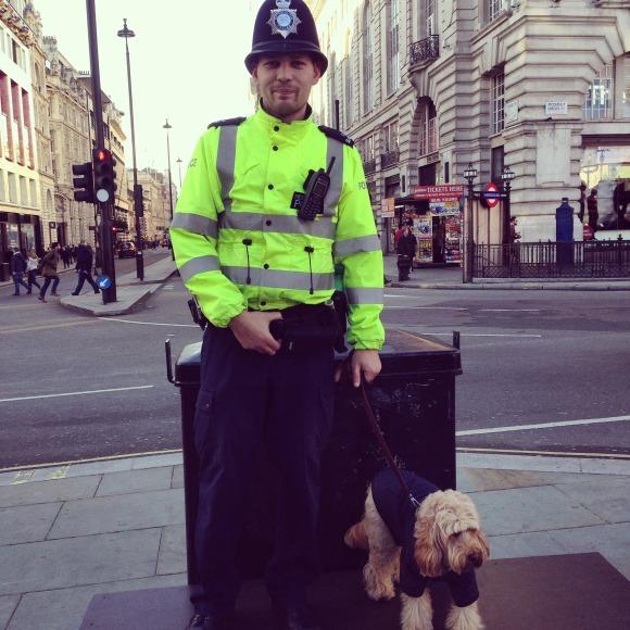 Dog Grooming Captain Street Coleraine