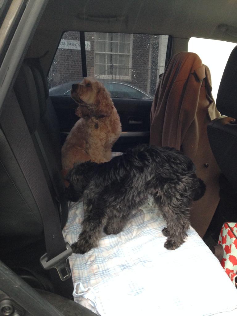 Dog Friendly Vacation Rentals Myrtle Beach Sc