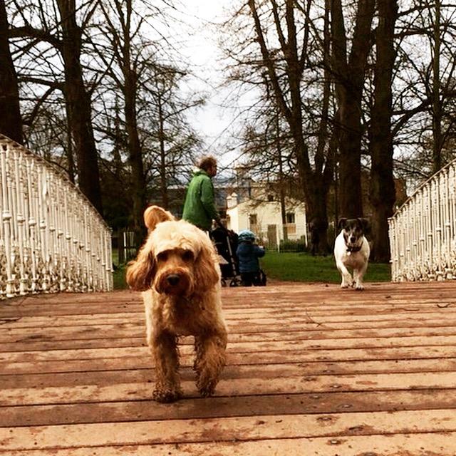 Dog Friendly Restauants Plymouth Wi Com