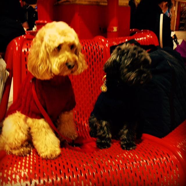 Dog Friendly Overnight Accomodation Near Glasgow
