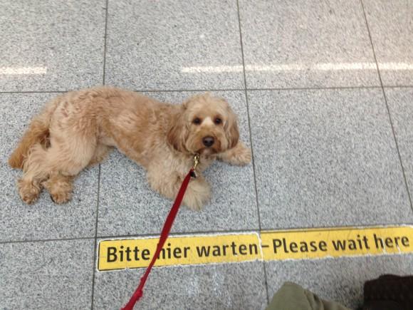 Image Result For Dog Training Warren