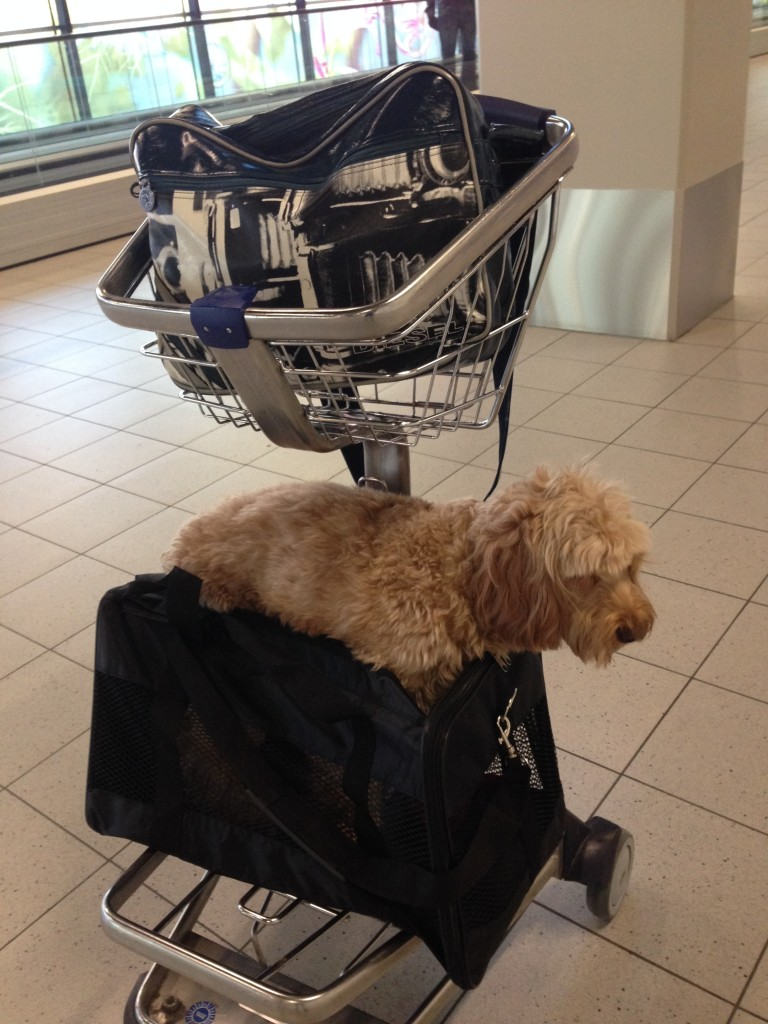 Dog Friendly Ferry To Isle Of Man