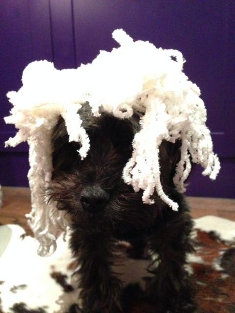 Dog Grooming Clothing Australia