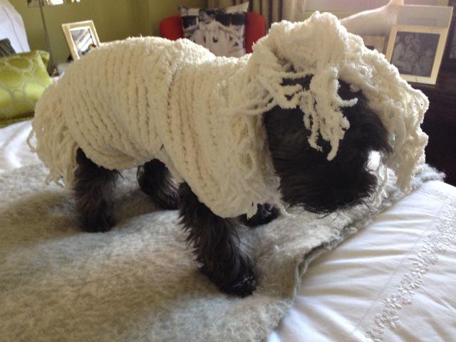 Woof Dog Grooming Ione Ca