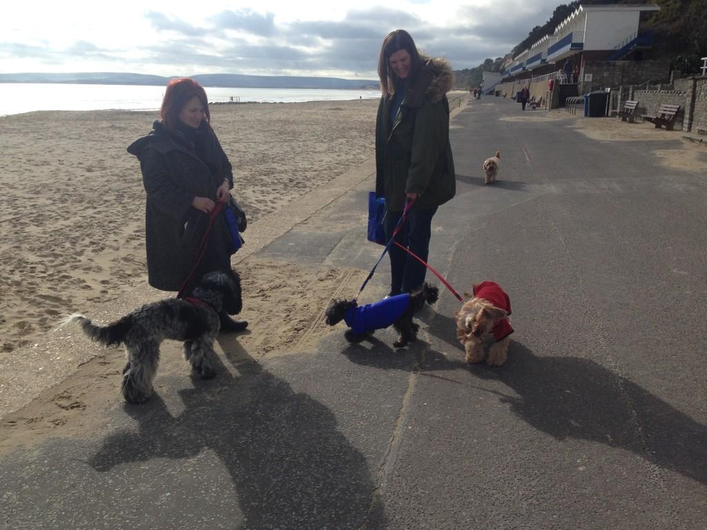 Dogs On Sandbanks Beach