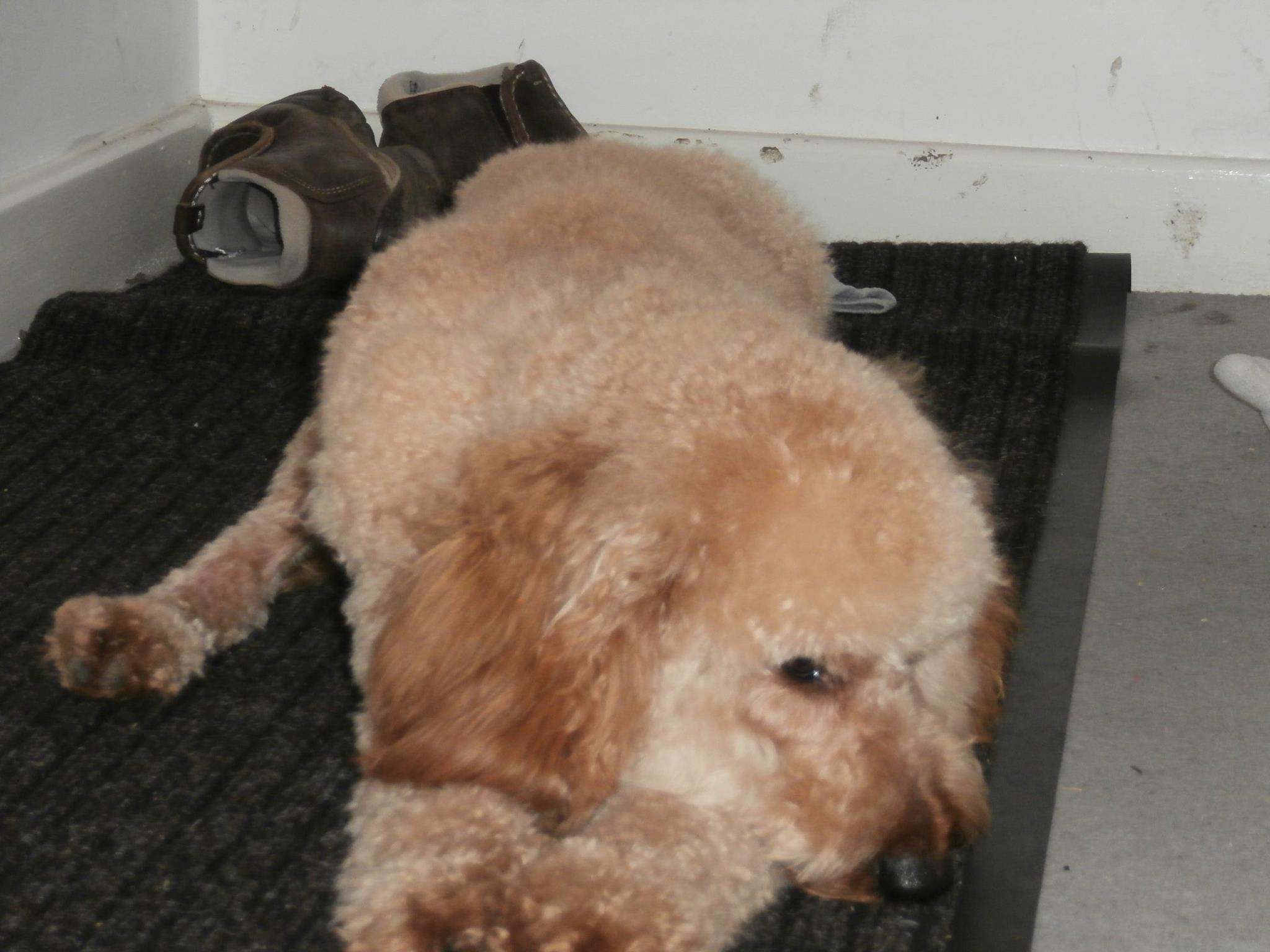 Hessle Dog Rescue Facebook
