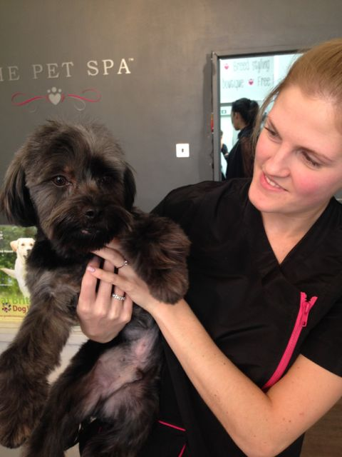 Happy Pet Spa Dunnellon Fl