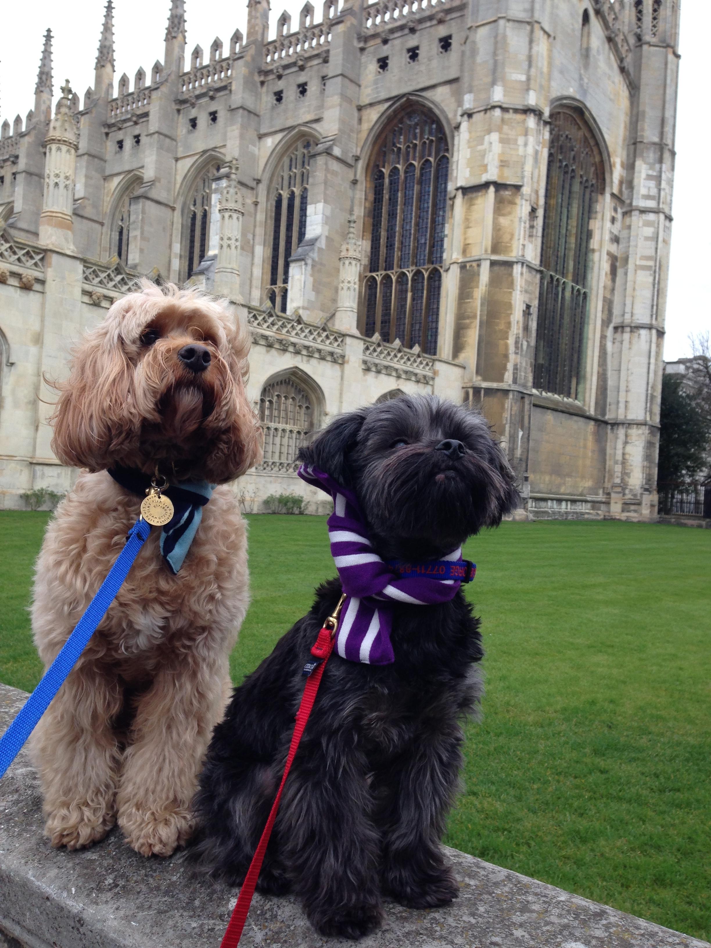 Dog Friendly Cambridge