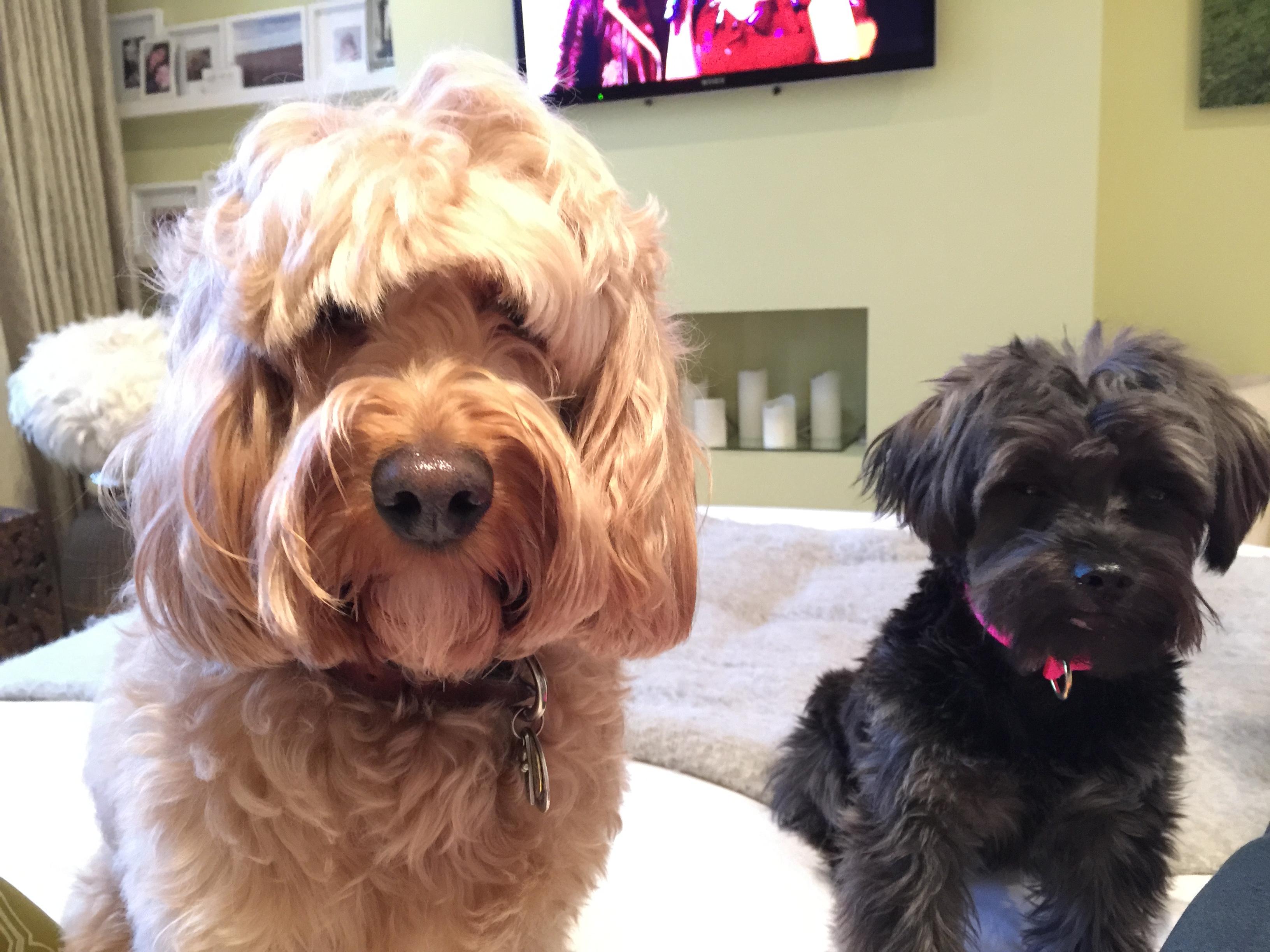 Shaggy Dog Grooming Maple Grove Mn