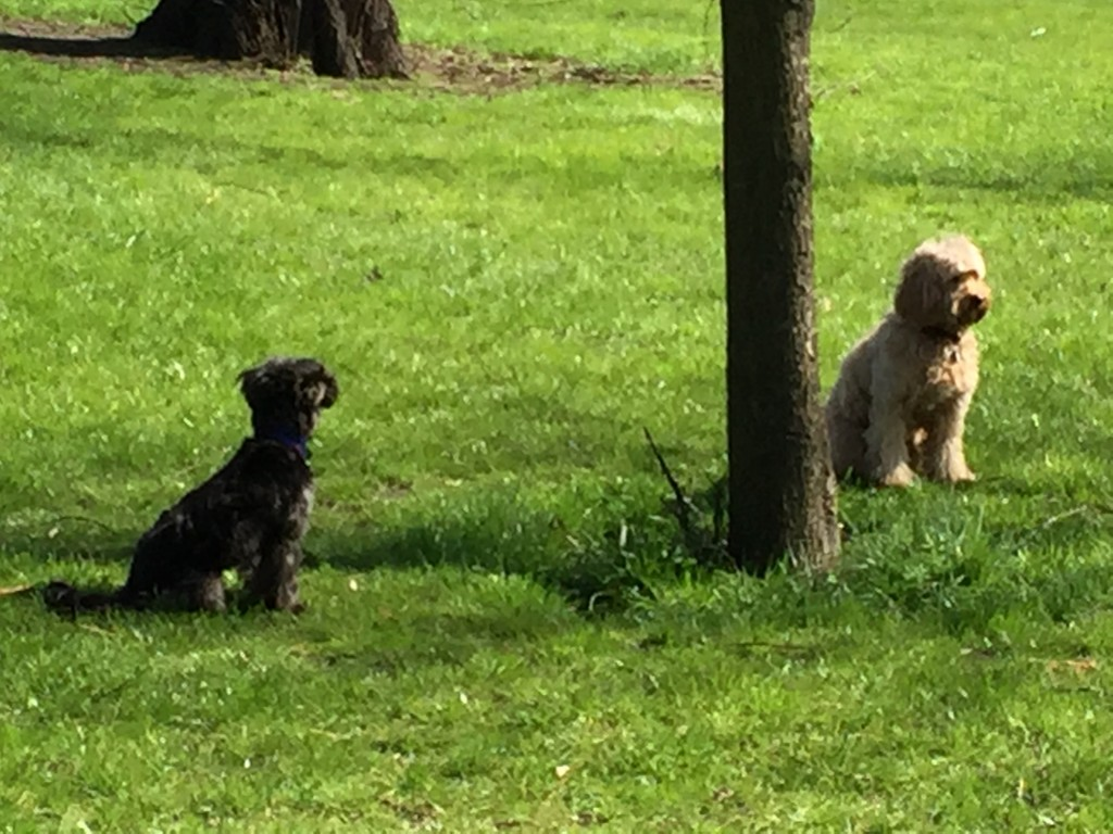 Image Result For Squirrel Dog Training