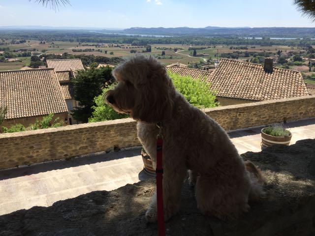 Dog Walks Through Abandond House