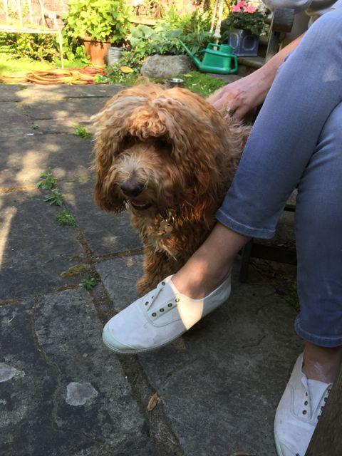 Dog Grooming Stanley Street