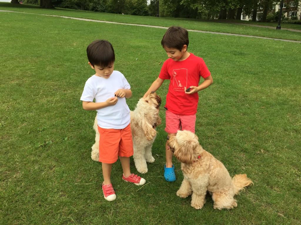 Teaching Dog Walk At Heel Video