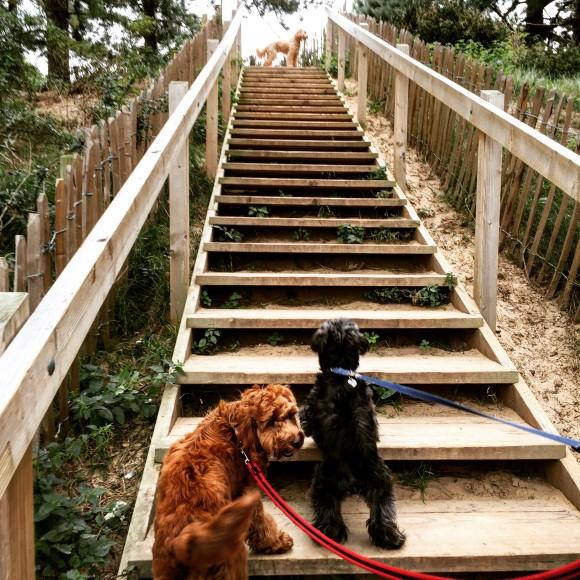 Wells Street Dog Groomer Pet Boarding