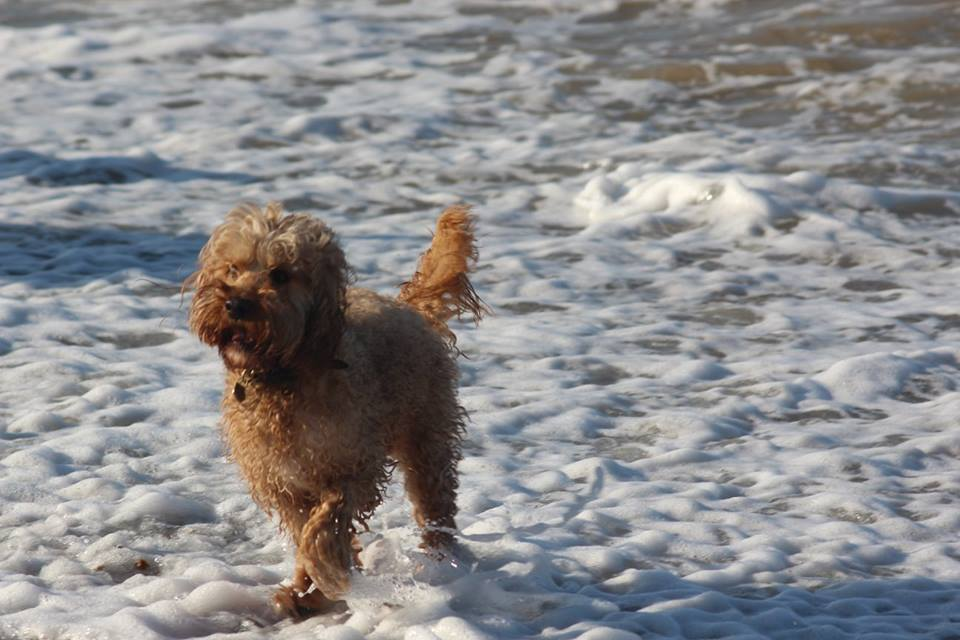 Dog Friendly Walks Near Skirmett
