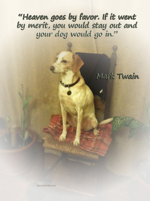 Quoting Mark Twain Miss Darcy S Adventures