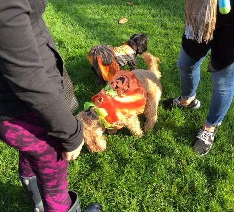 Dog Grooming Woodstock
