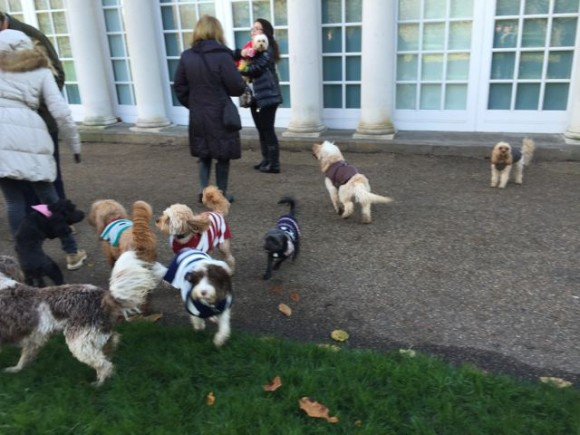 Image Result For Grace Dog Training