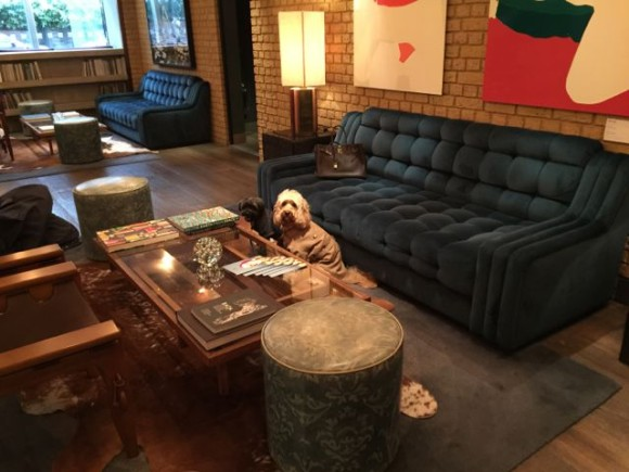 Dog Friendly Hotels Miss Darcy S Adventures
