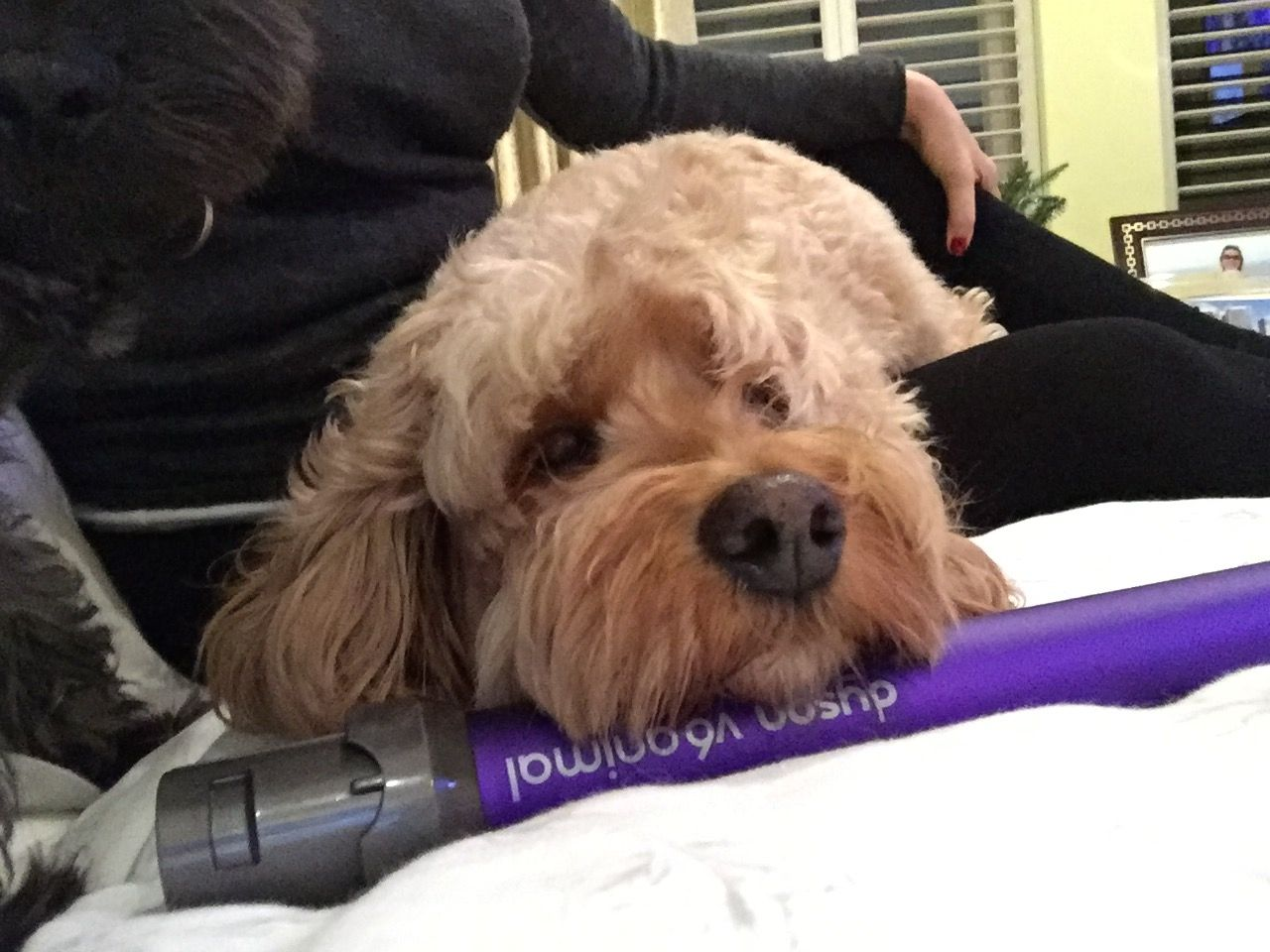 Dyson Dog Grooming Attachment