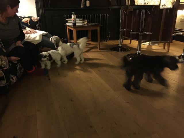 Dog Friendly Accommodation Farnham