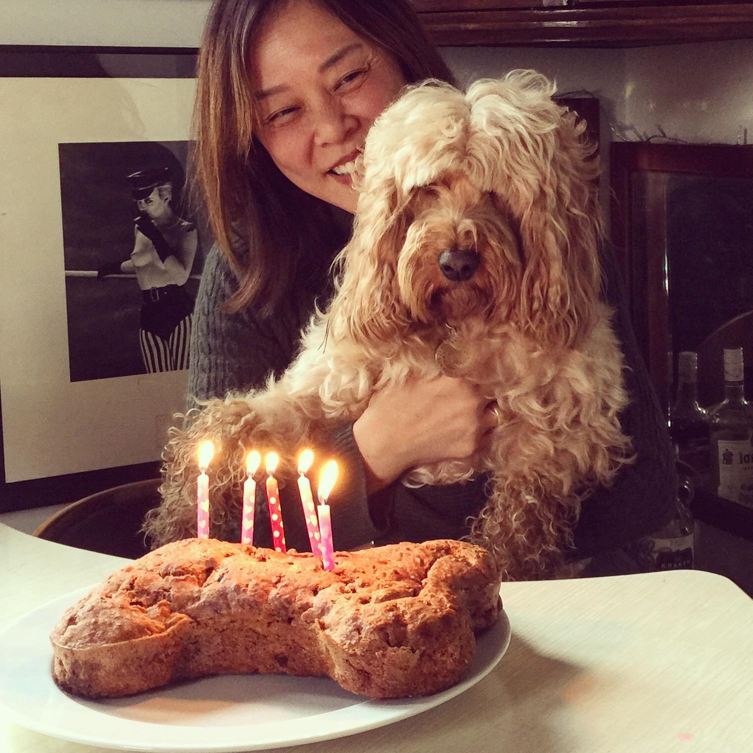 Birthday Cake Darcy