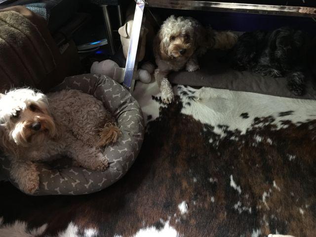 Dogs Enjoying Beds