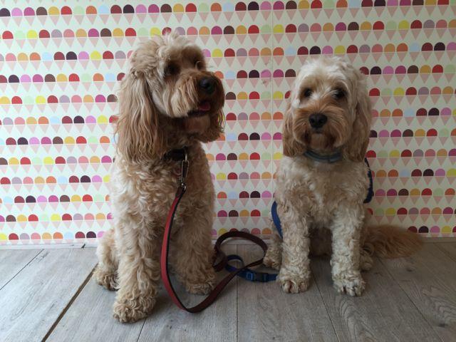 Walkabout Dog Training Farnham