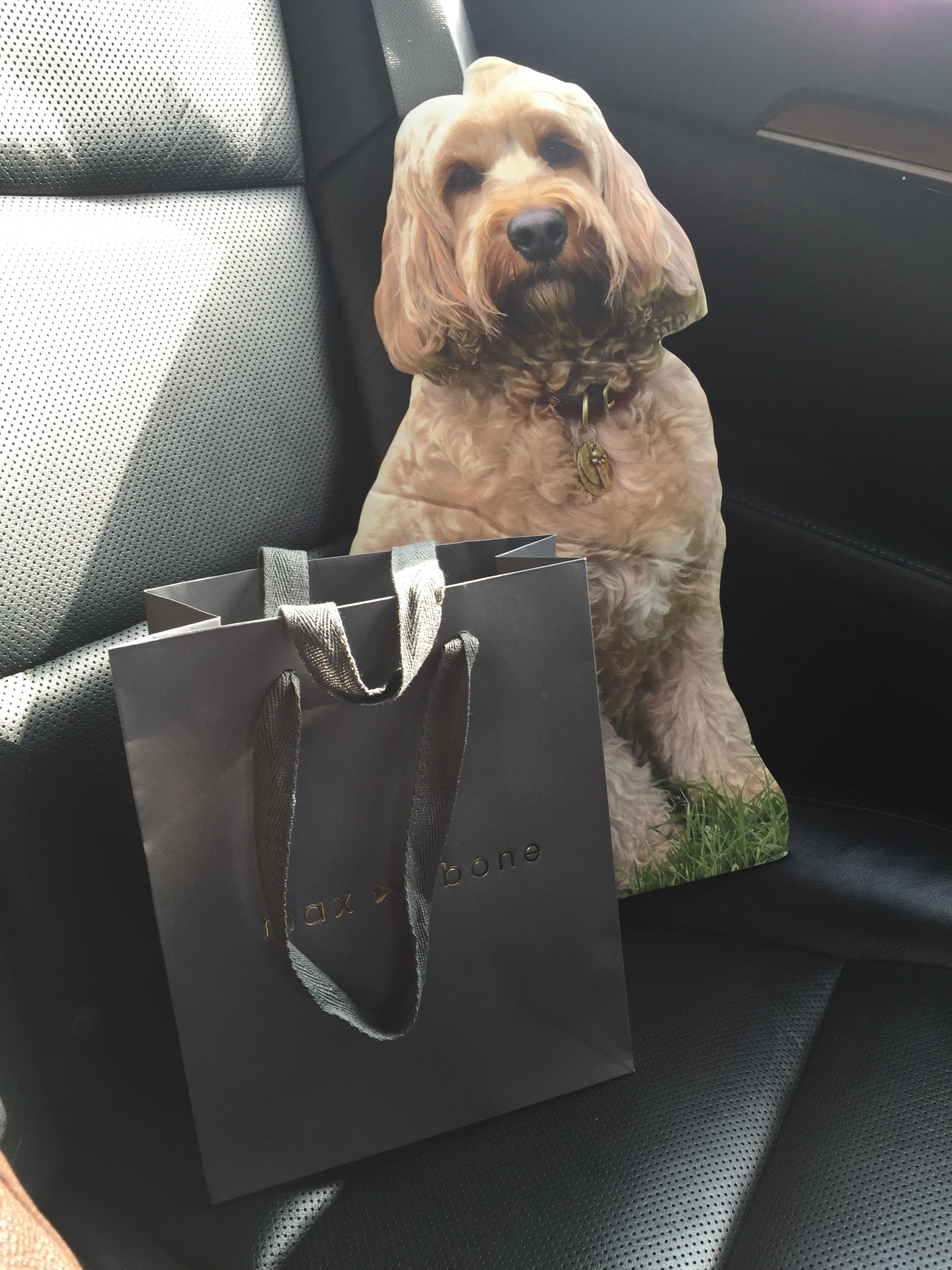 Buy Dog Coats Uk