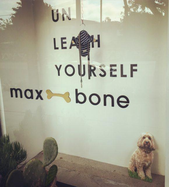 Hollywood Dog Grooming El Paso Tx