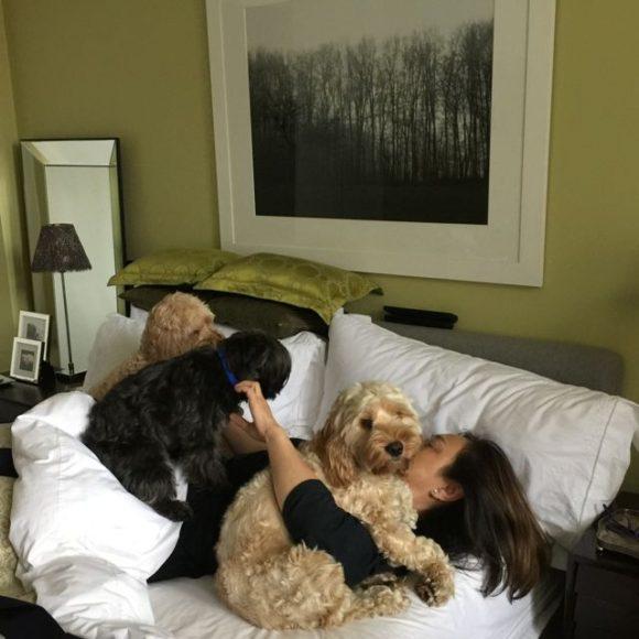 Dog Grooming Room Ideas