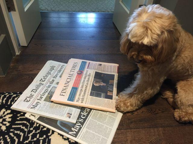 Theresa Dog Grooming Arnold