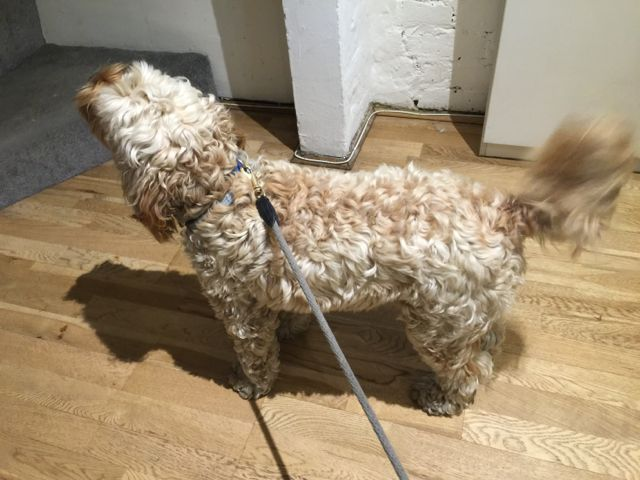 Image Result For Can Dogs Whiskers