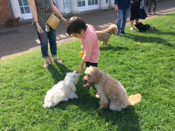 Dog Grooming Surrey Quays