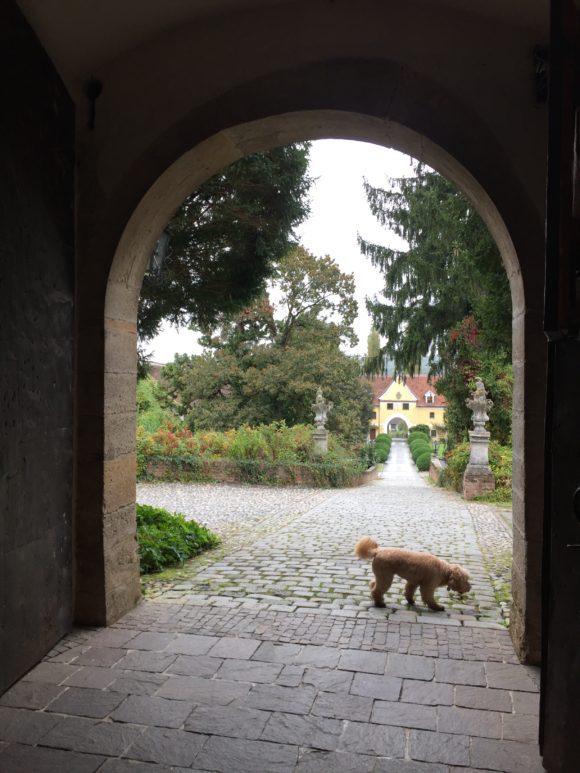 Big Schloss Dogs