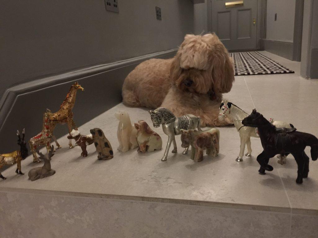 Noahs Ark Dog Food