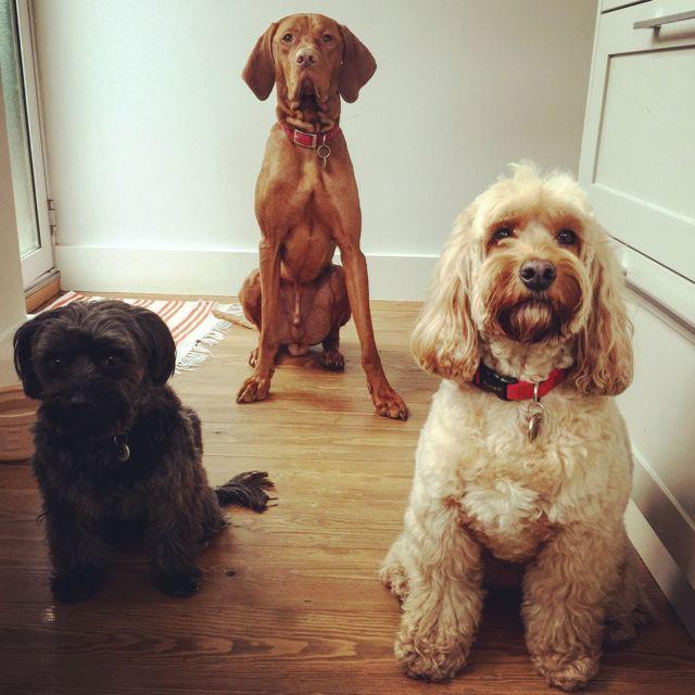 Orlando Dog Training Gorleston
