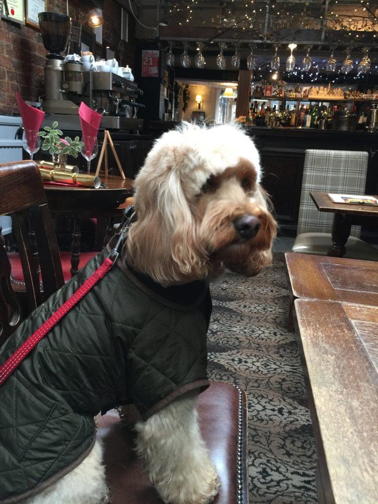 Dog Friendly Pub Near Sn