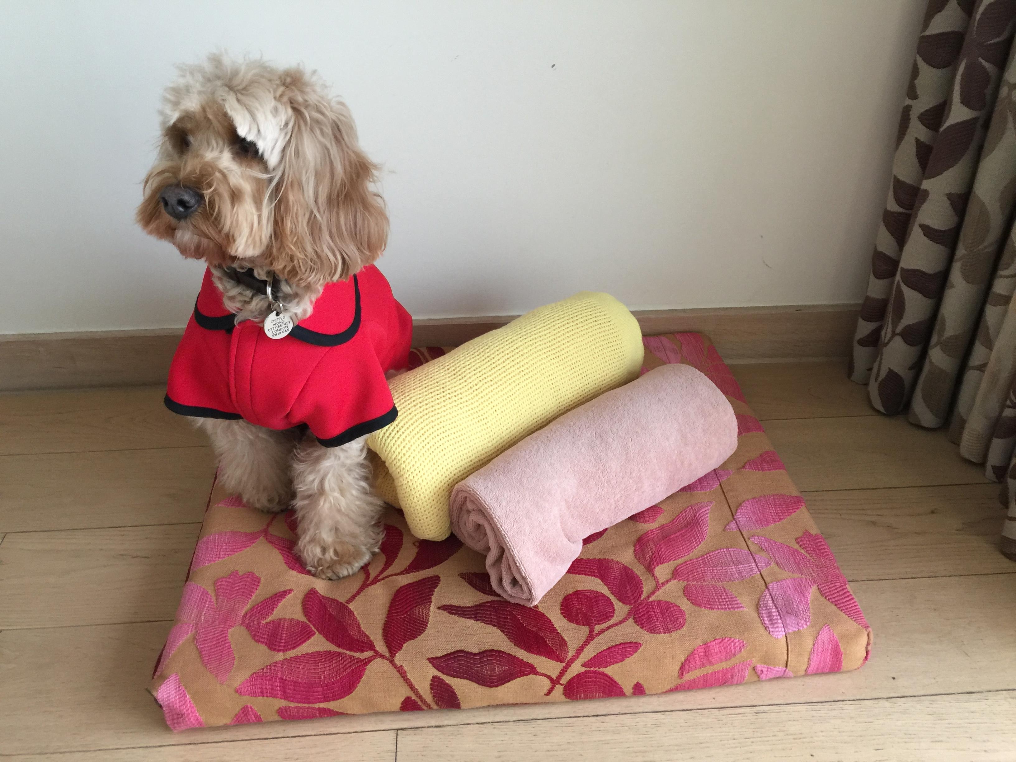 Dog Bed Cushions Uk