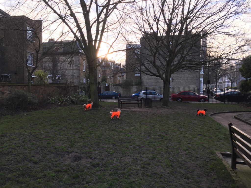 Enclosed Dog Parks Chicagos