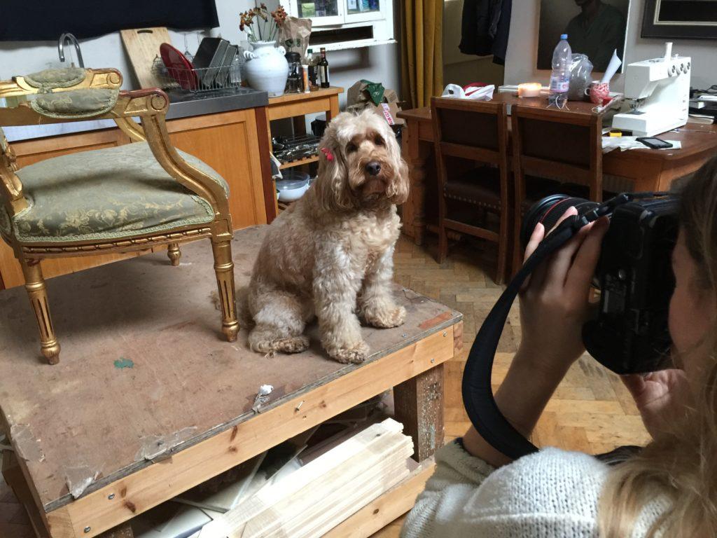 Image Result For Dog Training Henrietta