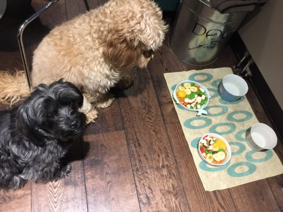 Feeding Dogs Raw Organ Meat Can Be Dangerous To Humans