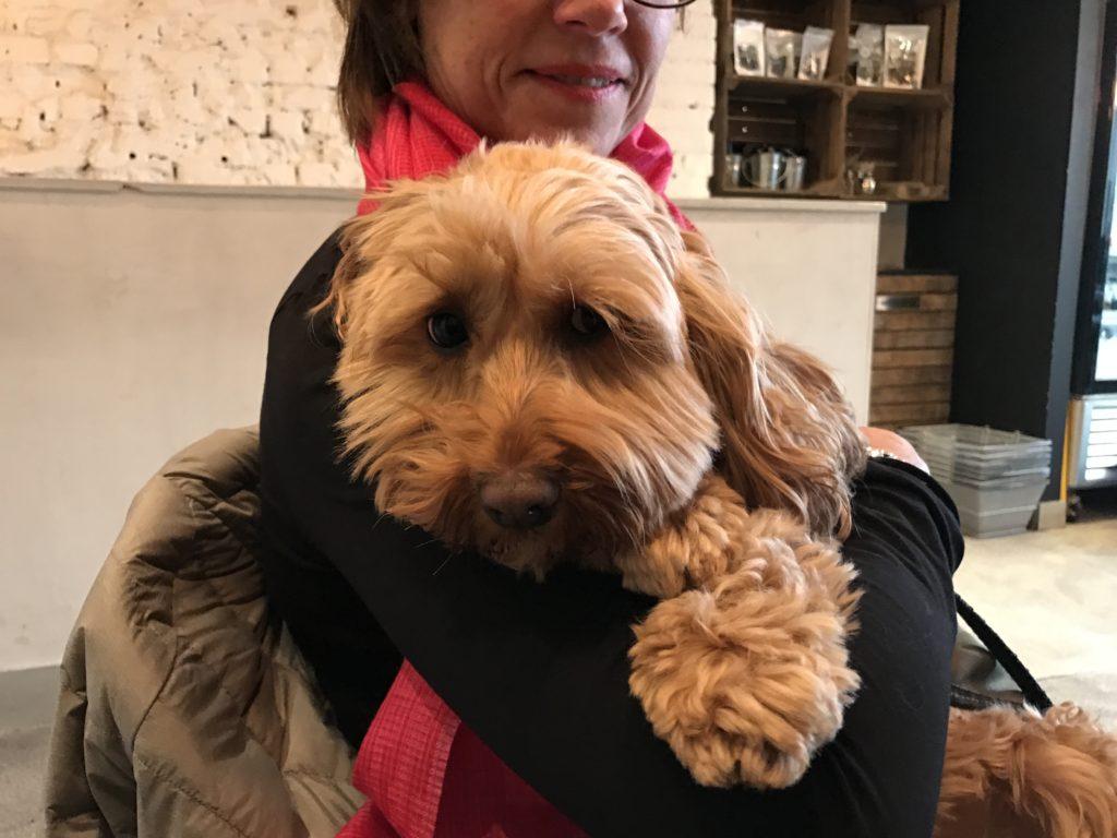 Oxfordshire Dog Training Becomea Dog Trainer Course Uk